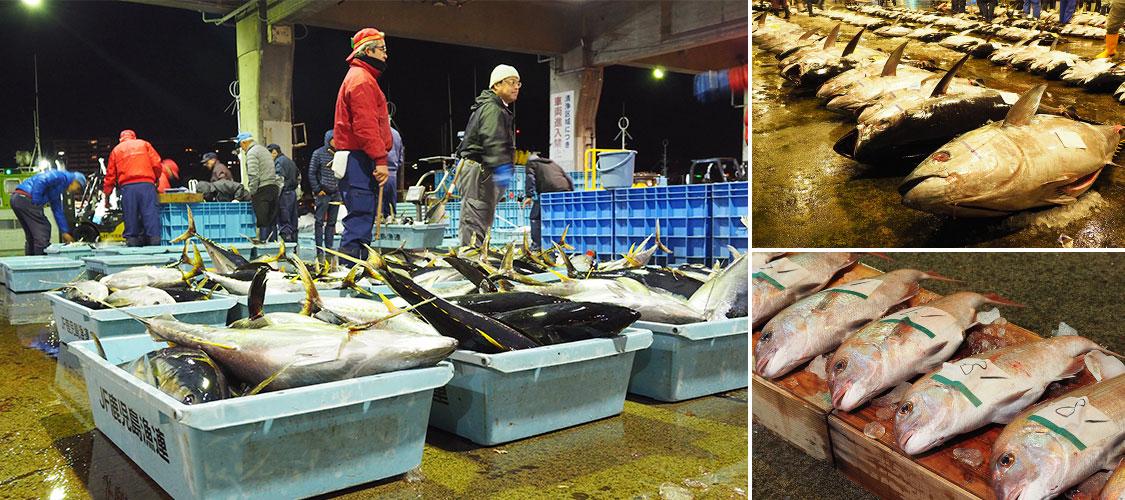 午前6時 鹿児島魚類市場にならぶ鮮魚