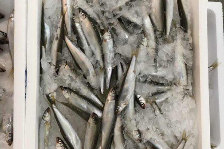 本日の旬の魚